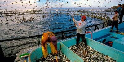 Taking the Fish Out of Fish Feed